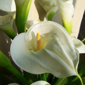 Hochzeitsblumen: Callas