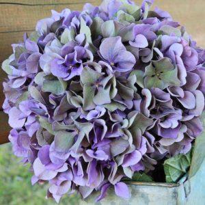 Hochzeitsblumen: Hortensien